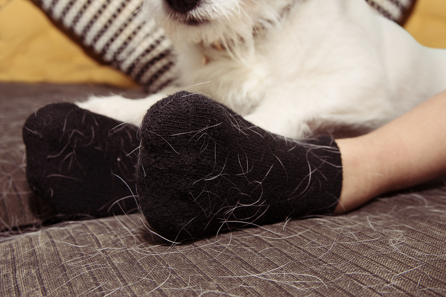 Dog Hair On Black Clothing