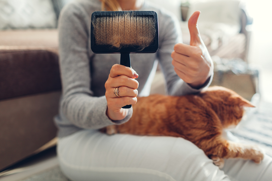 Combing ginger cat with comb brush at home. Woman owner taking care of pet to remove hair.