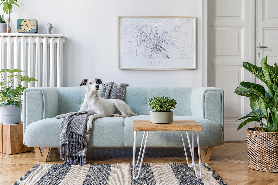 Stylish scandinavian living room interior of modern apartment with mint sofa, design coffee table, furnitures, plants and elegant accessories. Template. Beautiful dog lying on the couch. Home decor.