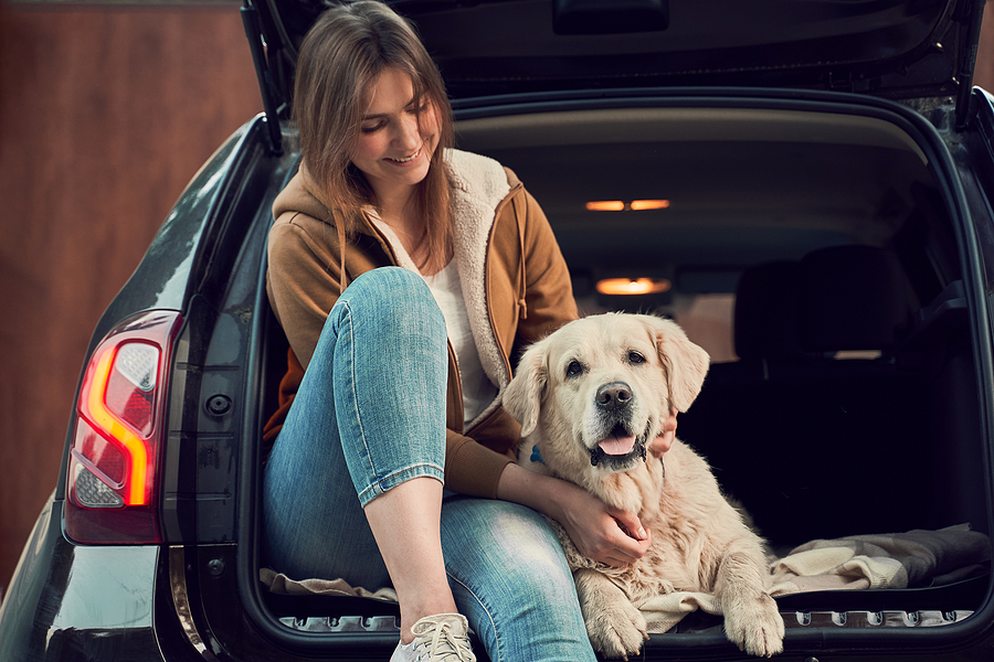 Young woman in blue jeans next to golden retriever sitting in open trunk of black car